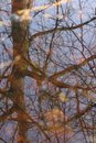 Reflection of Tree oak in water Royalty Free Stock Photo