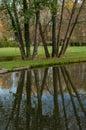 Reflection of tree trunks Royalty Free Stock Photo