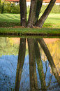 Reflection of tree trunks Royalty Free Stock Photo