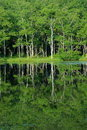 Reflection of trees in a lake Stock Photos
