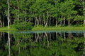 Reflection of trees in a lake Royalty Free Stock Photo