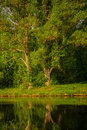 Reflection of trees on the water surface in a pond Royalty Free Stock Photo