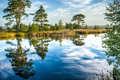Reflections on a calm swamp lake cloudy blue morningsky with dwingelderveld nedtherlands Stock Images