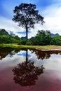 Reflections of laos tree khammouane province autumn Royalty Free Stock Photo