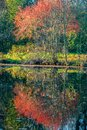 Reflections of autumn coloured foliage on a tree in a pond Royalty Free Stock Photo