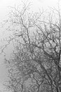 Reflections of tree branches in water an abstract black and white reflection a lake on a misty day Stock Photos