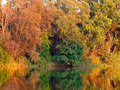 Reflective pond colorful autumn forest detail Stock Photo