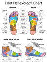 Reflexology Plantar Sole Profile Feet Royalty Free Stock Photo