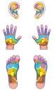 Reflexology Zones Ears Hands Feet