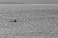 Regatta canoe race teenager endurance fitness male rowing single skulls time trial Stock Photography