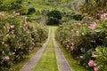 Reihe der Oleander-Blumen Stockfotografie