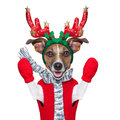 Reindeer dog with red gloves and pullover Stock Images