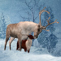 Reindeer and Fawn Winter Greeting Card Royalty Free Stock Image
