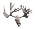 Reindeer Skull And Antlers Iso...