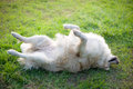 Relax golden retriver labrador in the garden Stock Photos