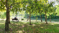 Relax under shade of tree in the park man escape busy working day sit green on lake side bangkok city center Royalty Free Stock Photo