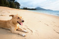 Relaxed dog on tropical beach relaxing sand near the blue Stock Images