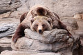 Relaxing Grizzly Bear Teddy Bear Rug Royalty Free Stock Photo