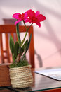 Relaxing home office with blossoming red orchid flower Stock Image