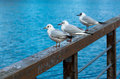 Relaxing seagulls on banister standing Royalty Free Stock Image
