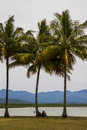 Relaxing under coconut trees on shoreline with distant mountains Royalty Free Stock Photography