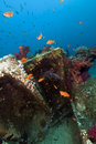Remains and cargo of the Yolanda  in the Red Sea. Royalty Free Stock Photo
