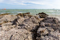 The remains of many shells on the stones and blurry sea with sky background Royalty Free Stock Images
