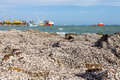 The remains of many shells on the stones and blurry ship with sea background Royalty Free Stock Photos