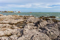 The remains of many shells on the stones and blurry ship with sea background Stock Photography