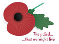 Remembrance Poppy Card Stock Photos