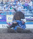 Reno rodeo usa june cowboy participant in a steer wrestling competition at the professional held in nevada usa on Royalty Free Stock Images