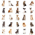 Repeating Pattern of Cats and Dogs Royalty Free Stock Photo