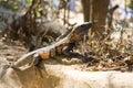 Reptile Zdjęcie Stock