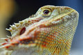 Reptile portrait close up shot of Stock Photography