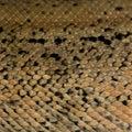 Reptile skin Stock Images