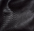 Reptile Skin Background