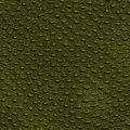 Reptile Skin Crocodile Texture Stock Images