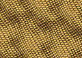 Reptile skin texture background Royalty Free Stock Photography