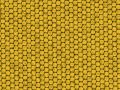 Reptile texture - yellow lizard Stock Photos