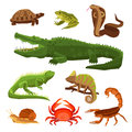 Reptiles And Amphibians Set Royalty Free Stock Photo