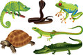 Reptiles and amphibians set photo realistic Stock Photo