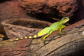 Reptiles live wild lizards shot close up in nature Stock Photo