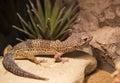 Reptiles Royalty Free Stock Photo