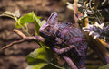 Reptiles live wild lizards shot close up in nature Royalty Free Stock Image