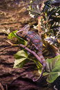 Reptiles live wild lizards shot close up in nature Stock Images