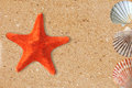 Res starfish and shells on the yellow sand Royalty Free Stock Photo
