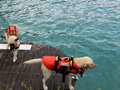 Rescue dog Royalty Free Stock Photo