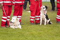 Rescue dog squadron in germany Stock Photography