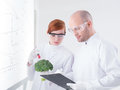 Researchers injecting broccoli close up of two people in a chemistry lab a with a whiteboard on the background Stock Photography