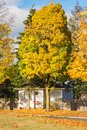 Family house and colorful tree in the fall Royalty Free Stock Photo